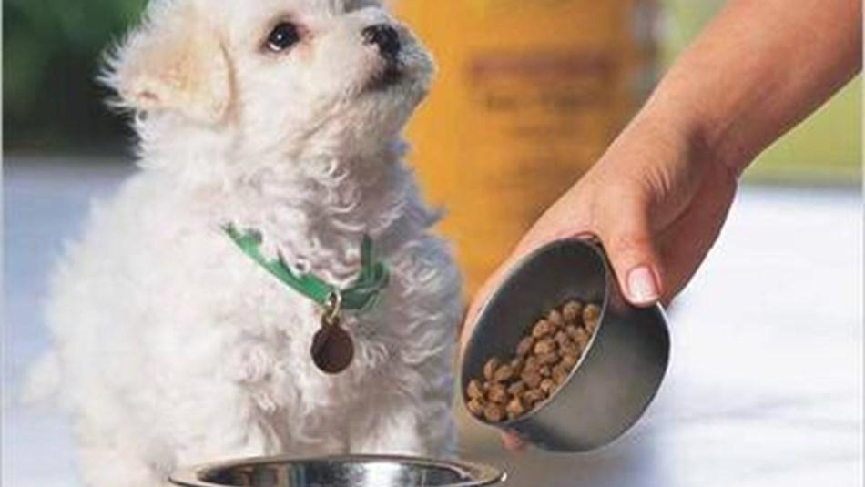 Søtningsstoff Farlig For Hunder Dyreklinikk No